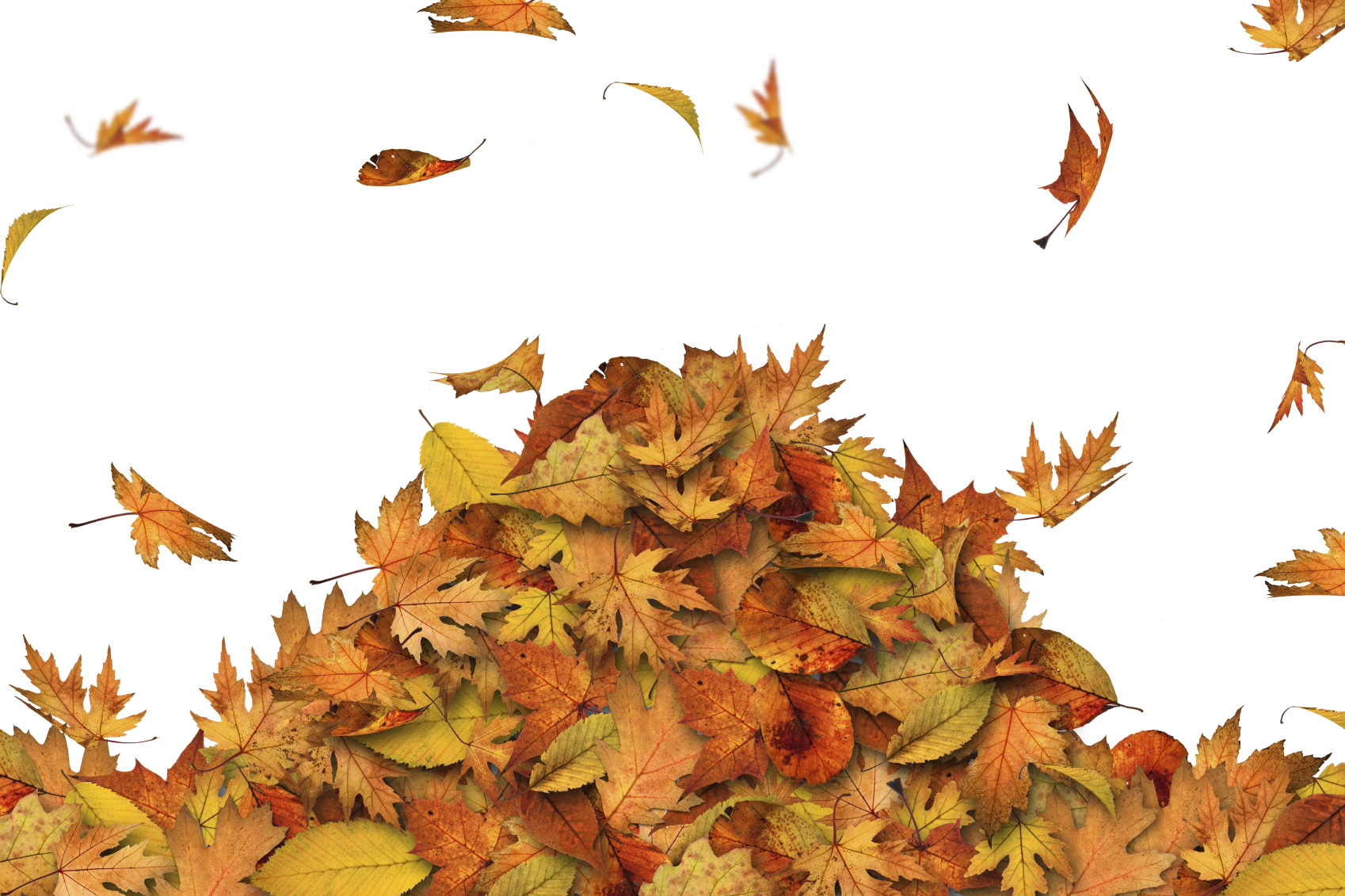 Leaf Removal Service Clear Cut Lawn Care Serving The Cary Nc Area